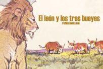 Fábula de El león y los tres bueyes