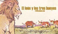 El leon y los tres bueyes
